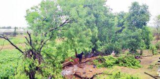 હાલ વાવાઝોડાની સ્થિતિના લીધે પર્યાવરણને પારવાર નુકશાન થયું છે જેમાં સૌથી મોટો હિસ્સો વૃક્ષો ધરાશાયી થવાનો છે. વિવિધ ઝોન દ્વારા આ વૃક્ષો એકત્રિત કરીને હાલ ખુલ્લી જગ્યામાં રખાયા છે.